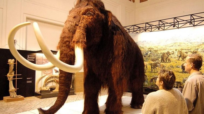 Výsledok vyhľadávania obrázkov pre dopyt Prírodovedné múzeum vBratislave